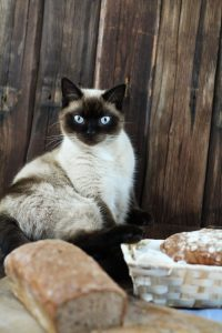 Katze Fotobomb