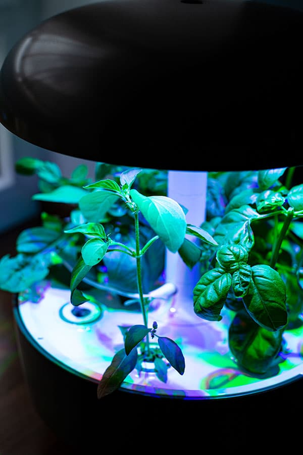 Kräuter in der Küche anpflanzen