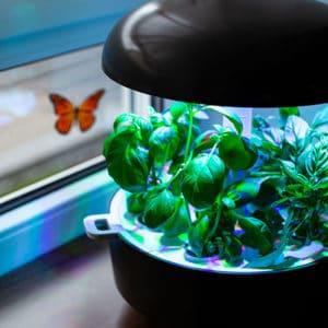 Hightech Gärtlein für die Küche - Plantui Smart Garden 6