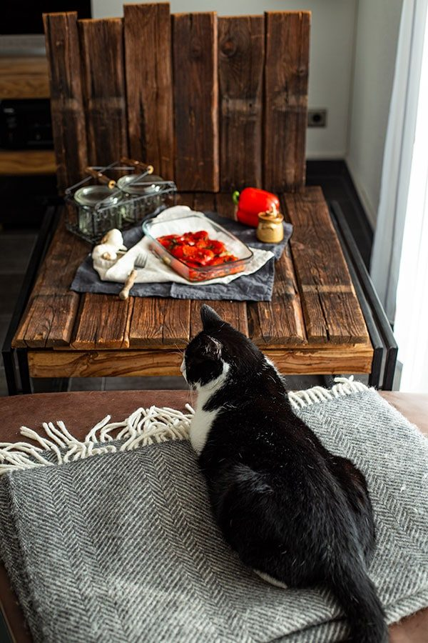 Katze hilft beim Bloggen